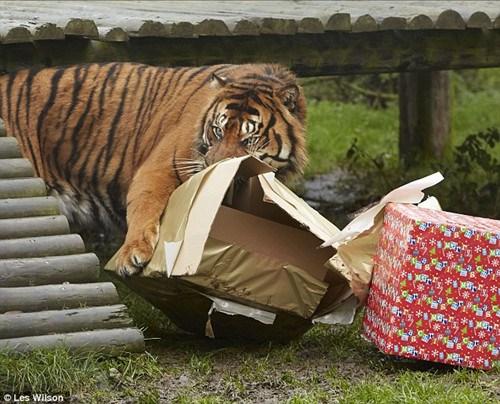 世界上最贵的老虎