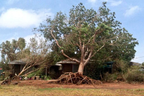 """克里斯蒂 澳大利亚/强热带气旋""""克里斯蒂""""将一颗大树连根拔起,砸在了一间房屋上..."""