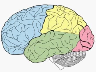 研究称人犬或共祖狗脑语音区与人类相似