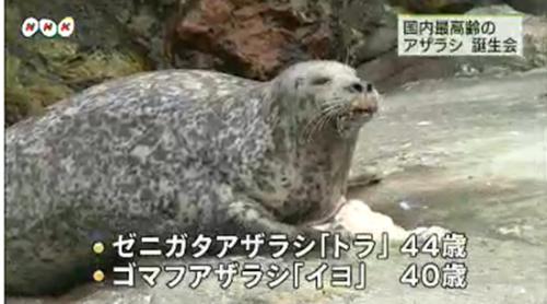 日本为最年长海豹开庆生会唱生日歌送礼物(图)
