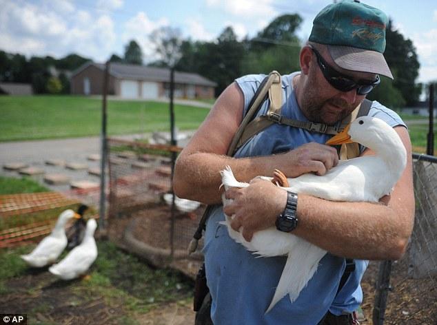 美国退伍军人饲养14只鸭子 称能治愈心理创伤