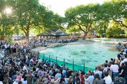 英国游客体验与动物开派对 老虎被泼啤酒(图)