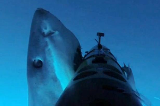 大白鲨不乐意被拍狂发飙 张嘴怒咬水下相机(图)