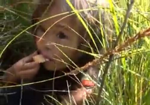 俄3岁小女孩被困森林11天 宠物狗守护终获救(图)