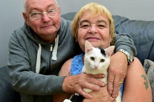英国夫妇宠物猫为雌雄同体 手术后成功变身母猫