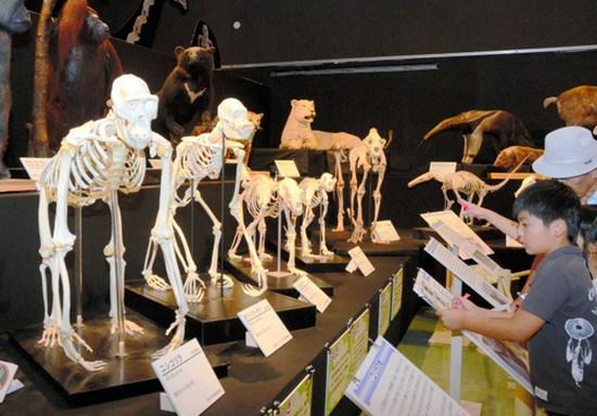 日本推出大规模骨骸展 称有助学习动物进化(图)
