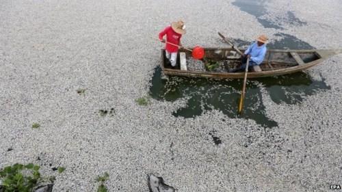 墨西哥湖泊鱼类大批死亡 打捞出近50吨死鱼