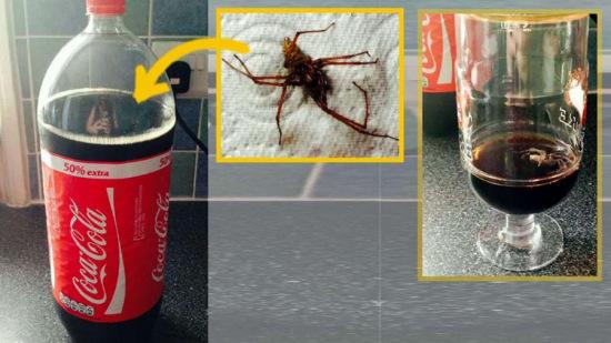 情侣在新买可乐发现5厘米蜘蛛 厂商承诺调查(图)