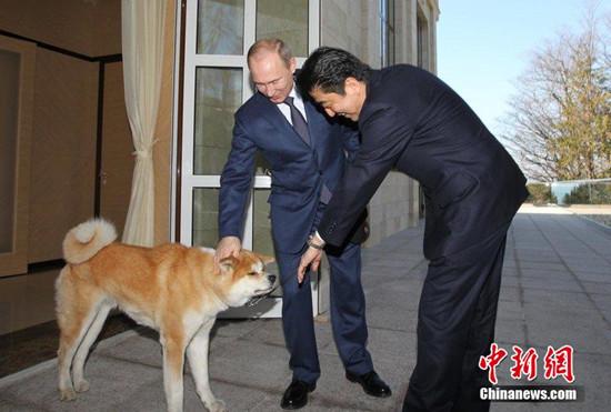 安倍致电普京祝贺生日 商定APEC峰会举行会谈