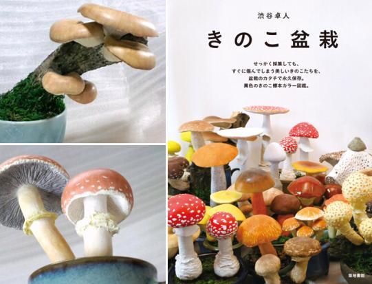 日本男子用黏土制作多彩蘑菇盆栽 形状各异(图)
