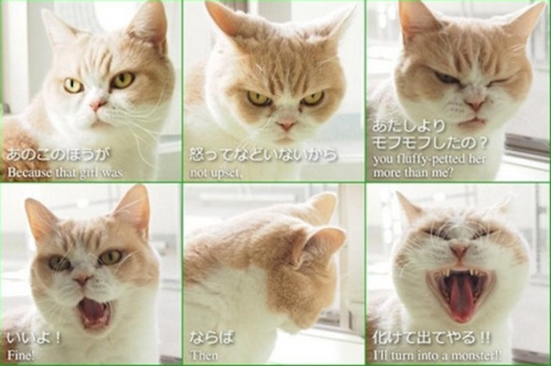 """日本猫咪跟风玩""""分手后自拍照""""萌趣十足(图)"""