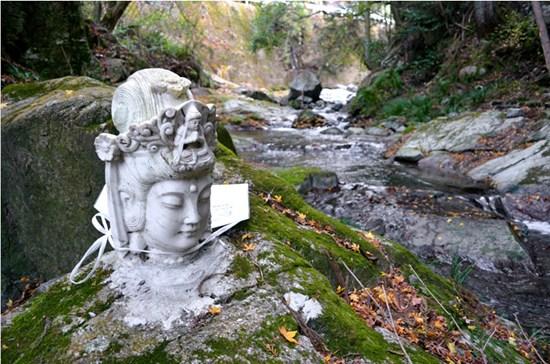 日本奈良河畔现神秘佛头不知何人安放(图)