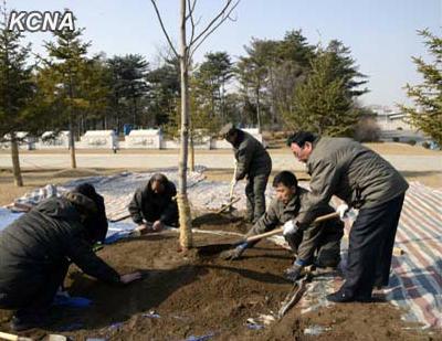 朝鲜植树节进行园林绿化工作共种植480万棵树