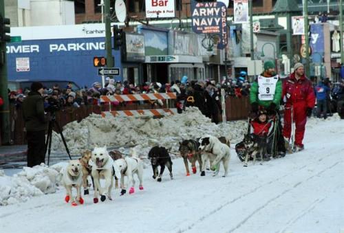 盲犬也能拉雪橇:失明狗助主人参赛顺利抵终点