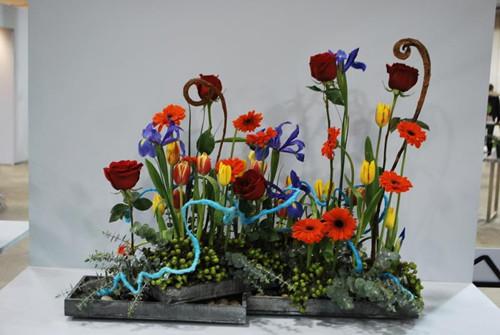 加拿大多伦多举办花展当地居民挥别寒冬迎新春