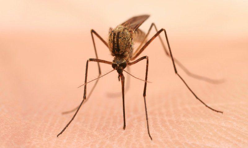 英研究称遭蚊虫叮咬几率或由体味遗传基因决定