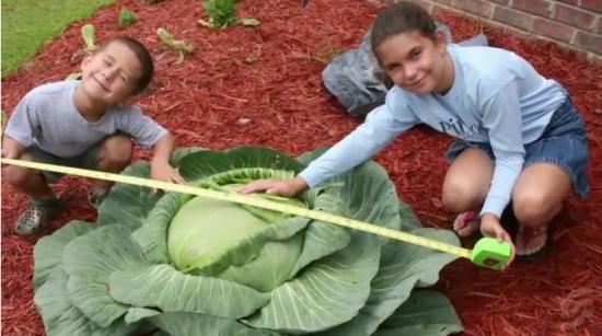 儿时种出巨型白菜受启迪少女欲开500菜园济贫