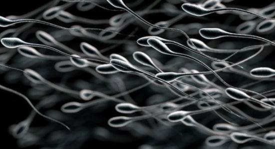 英国生物学家建议男性18岁就冷冻精子 有备无患