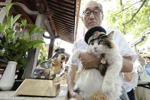 日本新猫咪站长走马上任向前站长小玉致敬(图)