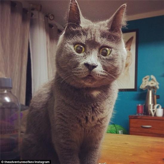 """小猫患脑积水反成网红""""吃惊""""表情别具一格(图)"""