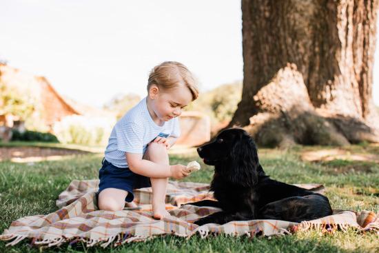 乔治小王子满三岁啦!英王室发布小寿星照片(图)