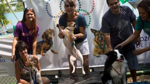 体育热情未退散:巴西里约首次举行狗狗奥运会(图)