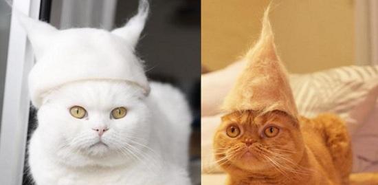 自己的毛自己戴:猫咪掉毛主人收集后制成小帽子