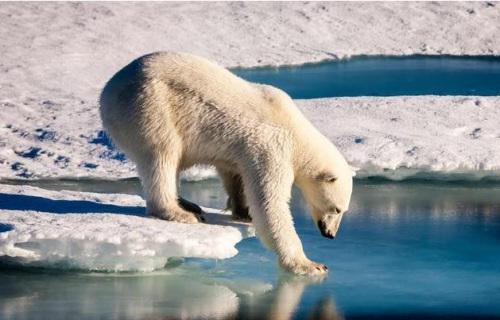 气候变迁致北极圈气温持续变高专家:极为异常