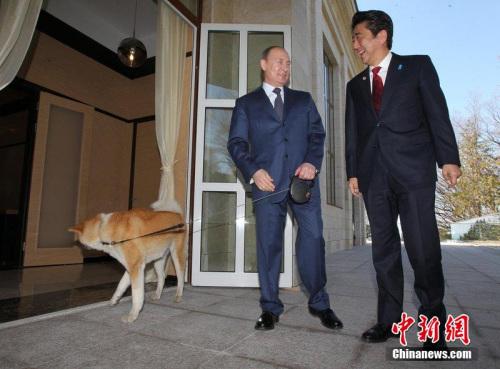 俄媒:日本拟再送普京一只秋田犬尚未获肯定答复