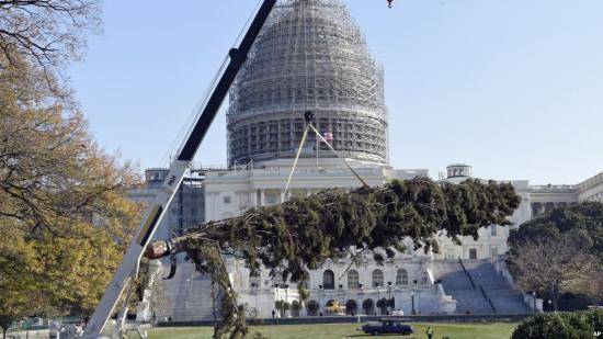 美国国会山点亮圣诞树:高24米挂1万多件装饰物