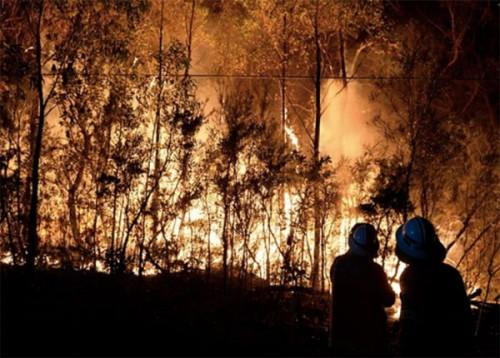 智利发生多起大规模山林大火灾区进入紧急状态