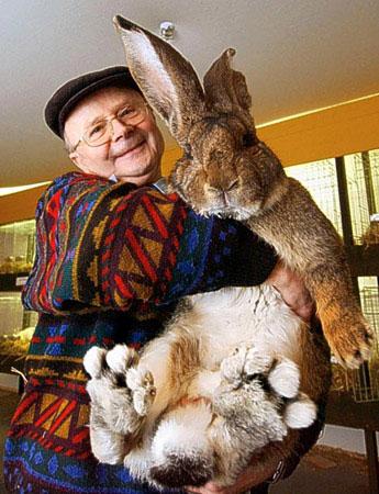 """获得""""世界最大兔子""""的桂冠。"""
