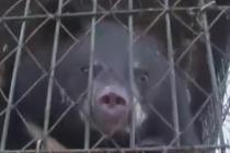 """俄罗斯政府禁止居民饲养""""危险宠物"""""""