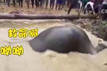 大象掉水坑众人齐力解救 场面滑稽又温馨