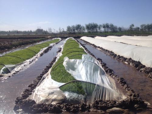 新疆遭遇今年以来强度最大沙尘暴近70万人受灾