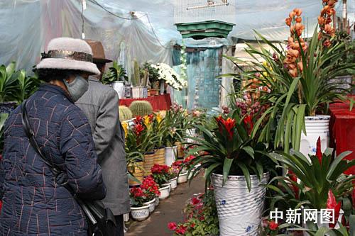拉萨太阳岛花卉市场,不少藏族居民乐购花卉喜迎藏历新年.