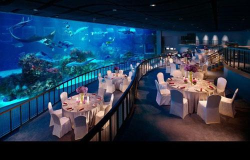 for Aquarium cocktail table