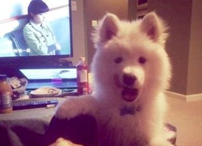 加拿大华裔宠物被没收赴法院起诉索赔偿(图)