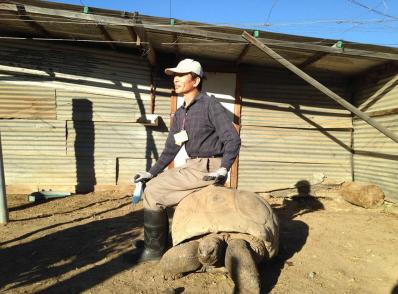 美华人果园内养三只沙漠巨龟
