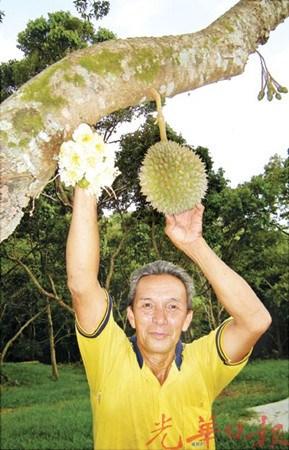 大马华裔男子栽种榴��40年分享果肉美味秘诀