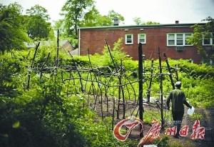 中国家长在耶鲁大学种菜种的是寂寞和乡愁