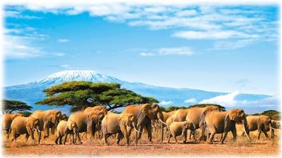 中国人热衷非洲游:看动物迁徙享休闲度假