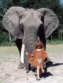 壁纸 大象 动物 狗 狗狗 265_350 竖版 竖屏 手机