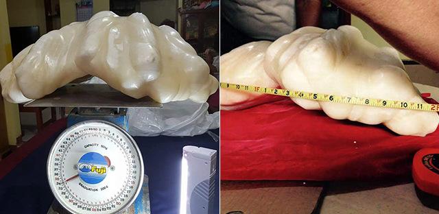 菲律宾现世界最大珍珠 价值1亿美元