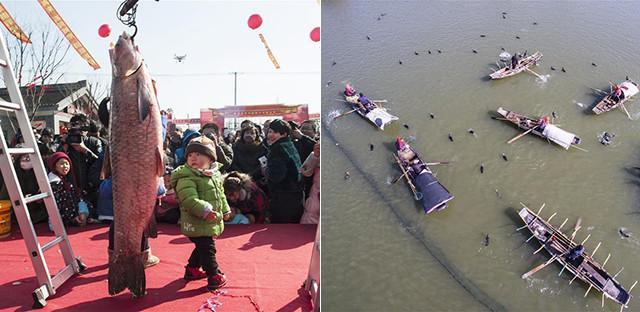 江苏海安举办冬捕节 鱼王比孩子大