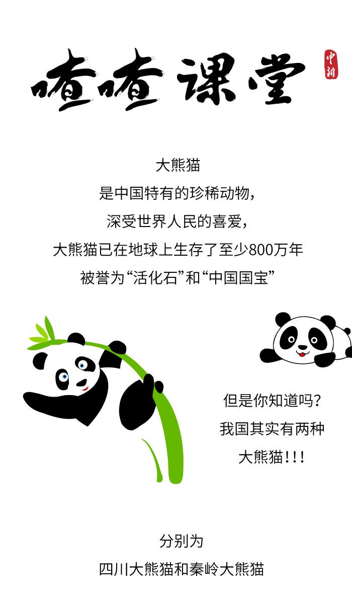 喳喳课堂|没想到吧!其实中国有两种大熊猫……