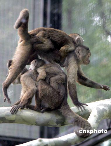 动物园繁殖后代