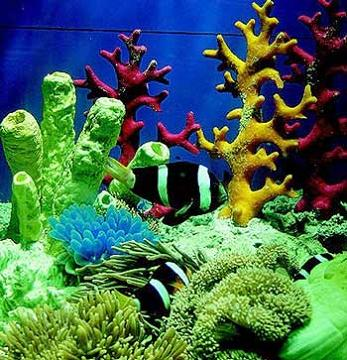 世界上最大最深的海:珊瑚海(图)
