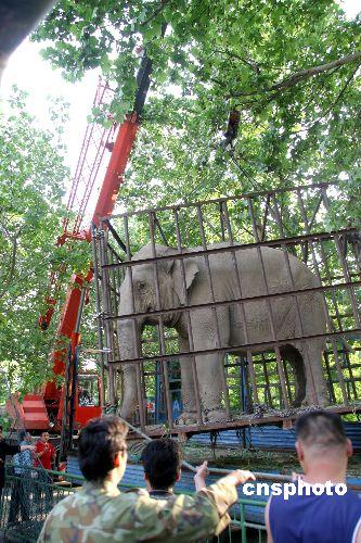 """图:北京动物园大象""""丽娅""""喜嫁济南"""