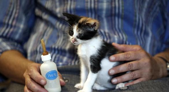俯瞰爱琴海、照顾流浪猫,这工作你想做吗?